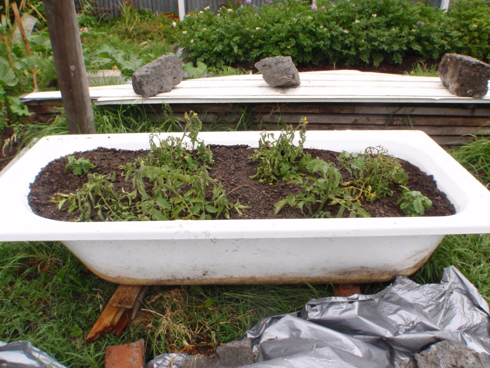 Tubbinu0027 Tomatoes