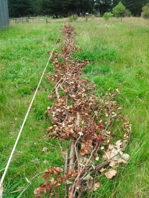 Permaculture Internship (1/6)