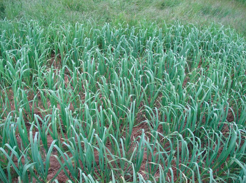 Permaculture Internship (3/6)