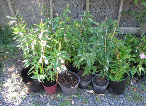 Screen shot 2015-03-01 at 6.10.45 PM