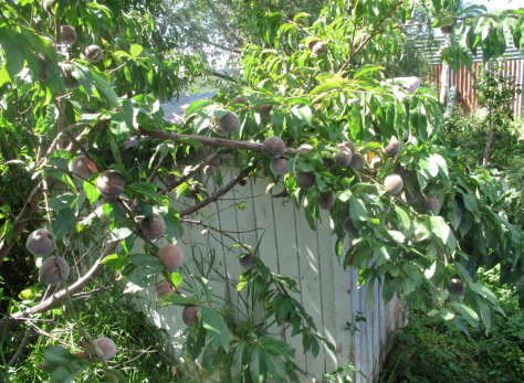 Screen shot 2015-03-01 at 6.11.16 PM