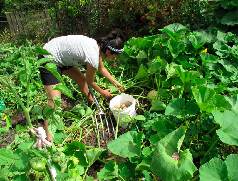 Permaculture Internship: July-September, 2015 (1/6)